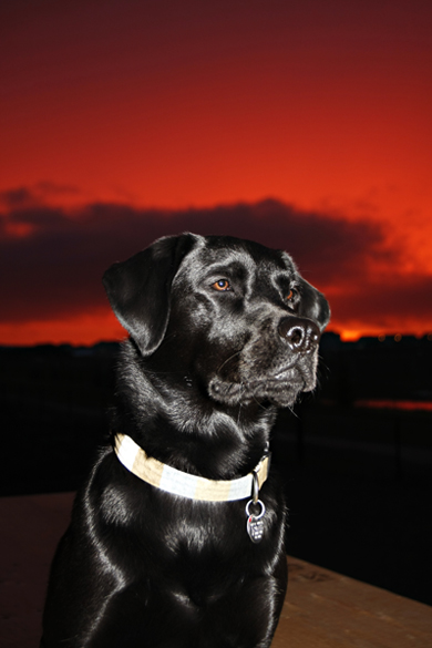 dog-photography2